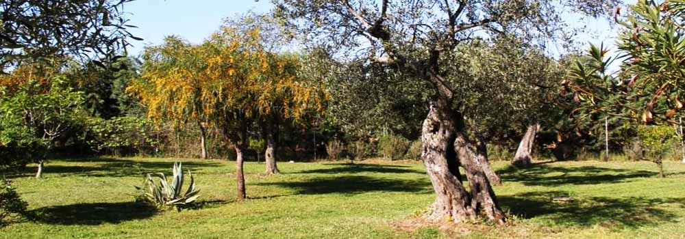 Villa Grazia Bed & Breakfast Alghero, Some of the beautiful trees surrounding our B&B in Alghero.